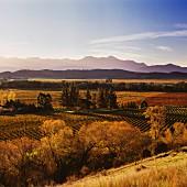 Herbstliche Weinberge von Little Beauty im Waihopai Valley, Marlborough, Neuseeland