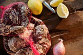 Oysters in a net