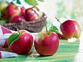 Apfelstilleben mit Elstar