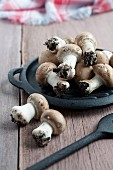 Fresh chestnut mushrooms