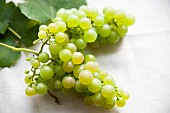 A bunch of green grapes with vine leaves