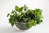 Stinging nettles in a colander