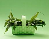 Fresh wild garlic in a green basket