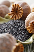 Poppyseed in a dish and poppy seed pods (close-up)