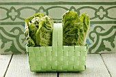 Fresh lettuce in a green basket