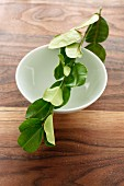 A sprig of lemon leaves balanced across a porcelain dish