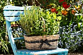 A basket of herbs on a garden chair