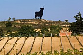 Osborne bull on ridge above vineyard near Briones, La Rioja, Spain. [Rioja Alta]