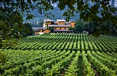 Winery and vineyard of Tenuta San Leonardo, Borghetto all Adige, Avio, Trentino, Italy.