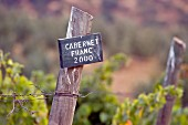 Wooden Cabernet Franc sign in vineyard of Haras de Pirque, Pirque, Maipo Valley, Chile.