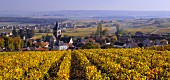 Autumnal vineyard above Ville-Dommange with village of Sacy beyond. Marne, France. [Champagne]
