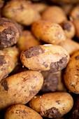 New potatoes (close-up)