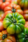 A green beefsteak tomato on various other tomatoes