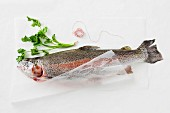 Fresh trout on a piece of paper, parsley and kitchen twine