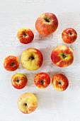 Elstar and Topaz apples