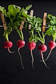 Radishes on a washing line