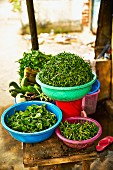 Fresh herbs at a market in Saigon (Vietnam)