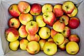 A basket of fresh apples
