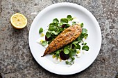 Smoked mackerel fillet with pepper on a watercress and beetroot salad with a horseradish dressing