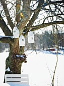 Bird nesting boxes hanging in tree in snowy garden