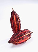 Two cacao pods