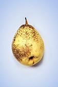 A Nashi pear on a coloured surface