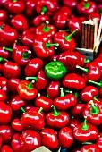 Tomatenpaprika