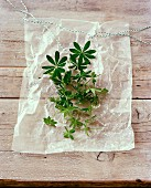 Fresh woodruff on parchment paper