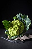 A head of romanesco broccoli