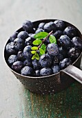 Freshly washed blueberries in a saucepan
