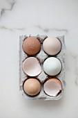 Ganze Eier & Eierschalen in Eierkarton (Aufsicht)