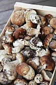 Porcini mushrooms in a wooden crate