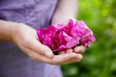 A woman holding freshly picked wild roses