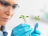 Wissenschaftlerin mit jungen Pflänzchen in Reagenzgläsern