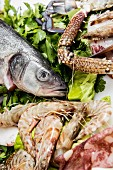 An arrangement of fish and crustaceans