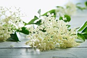 Elderflowers are wooden table