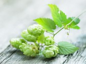 A sprig of hops on a wooden surface