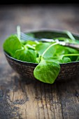 A bowl of winter purslane (Claytonia perfoliata) on a wooden table