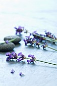 Lavender flowers on a stone surface