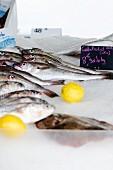 Cod at a fish market