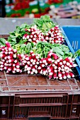 Bunches of radishes on a crate at a market