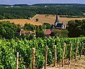 Weingut in Ricey-Bas, Champagne, Frankreich