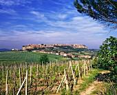 Weinberg mit der Stadt Orvieto im Hintergrund
