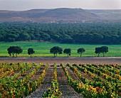 Spanische Landschaft mit herbstlichem Weinberg