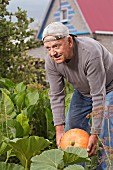 An older man harvesting a pumpkin in his garden