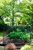 Gemüsebeete mit Rankhilfen aus Metall im Garten
