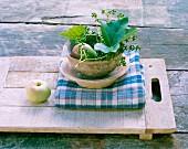 Apfel, Birne & Efeu in Schälchen auf Tisch im Freien