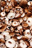Fresh shiitake mushrooms on a wooden table