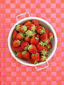 Fresh strawberries in a colander on a checked surface