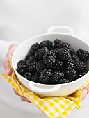 Fresh blackberries in a white porcelain bowl